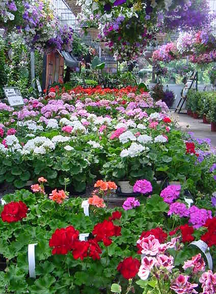 Whitney\'s Farm Market and Garden Center - Berkshire County\'s Best!