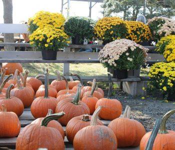 pumpkin-1214800_960_720
