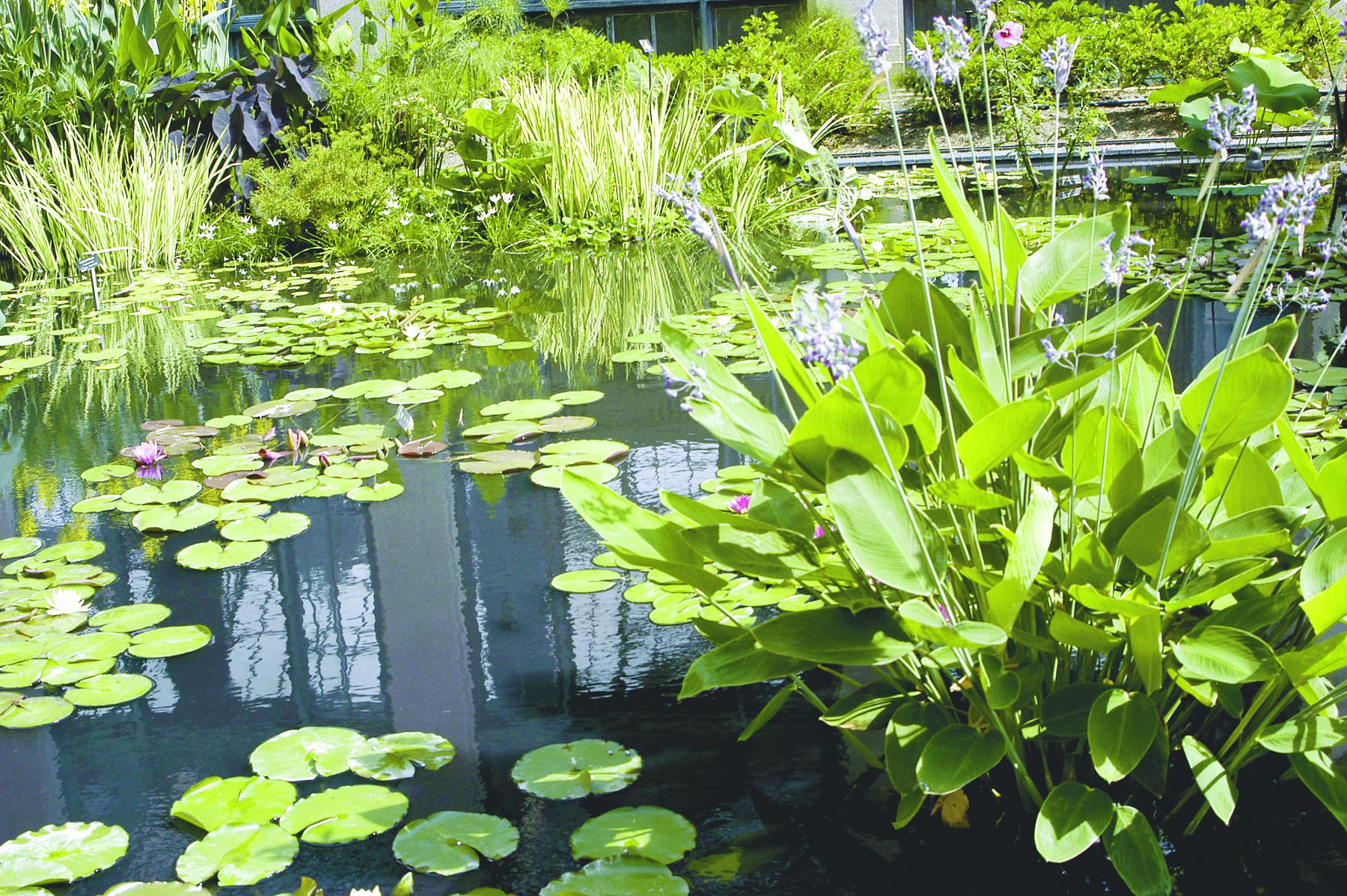 watergardens_0028
